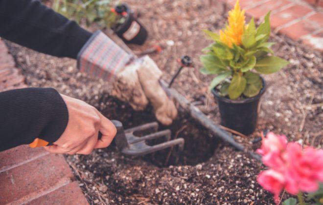 Jobba Som Trädgårdsarbetare